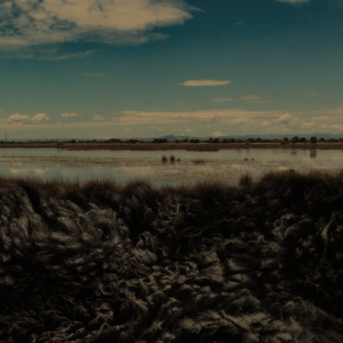 Paysage avec un lac et du sable